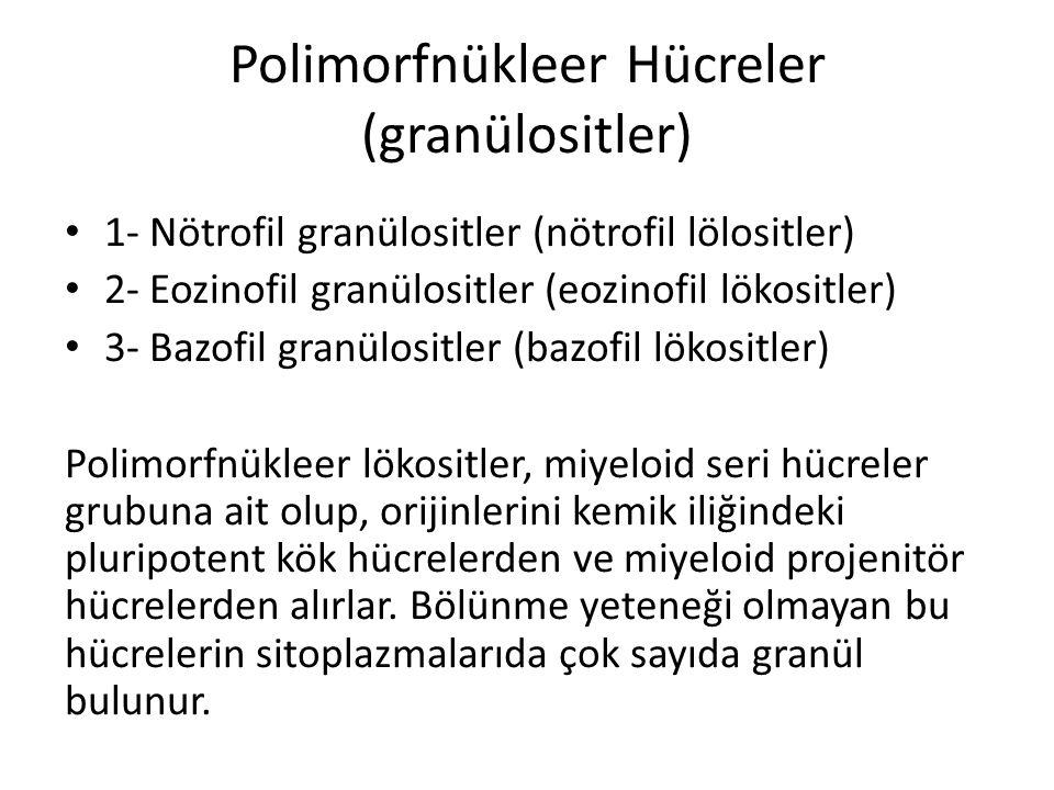 Polimorfnükleer Hücreler (granülositler) • 1- Nötrofil granülositler (nötrofil lölositler) • 2- Eozinofil granülositler (eozinofil lökositler) • 3- Ba