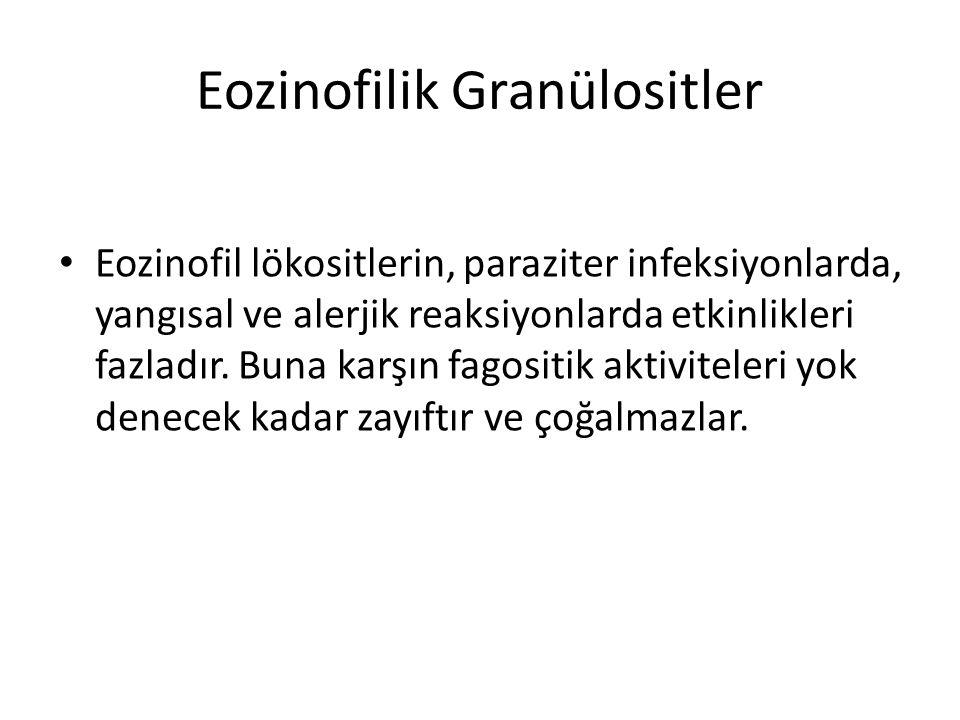 Eozinofilik Granülositler • Eozinofil lökositlerin, paraziter infeksiyonlarda, yangısal ve alerjik reaksiyonlarda etkinlikleri fazladır. Buna karşın f
