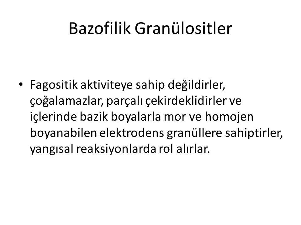 Bazofilik Granülositler • Fagositik aktiviteye sahip değildirler, çoğalamazlar, parçalı çekirdeklidirler ve içlerinde bazik boyalarla mor ve homojen b