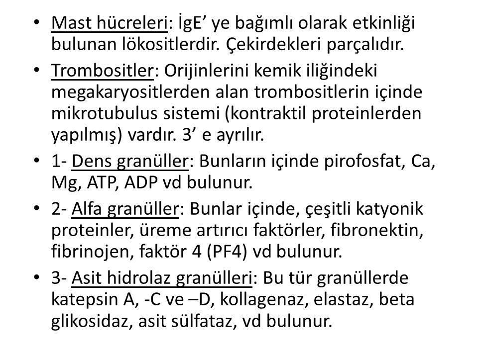 • Mast hücreleri: İgE' ye bağımlı olarak etkinliği bulunan lökositlerdir. Çekirdekleri parçalıdır. • Trombositler: Orijinlerini kemik iliğindeki megak