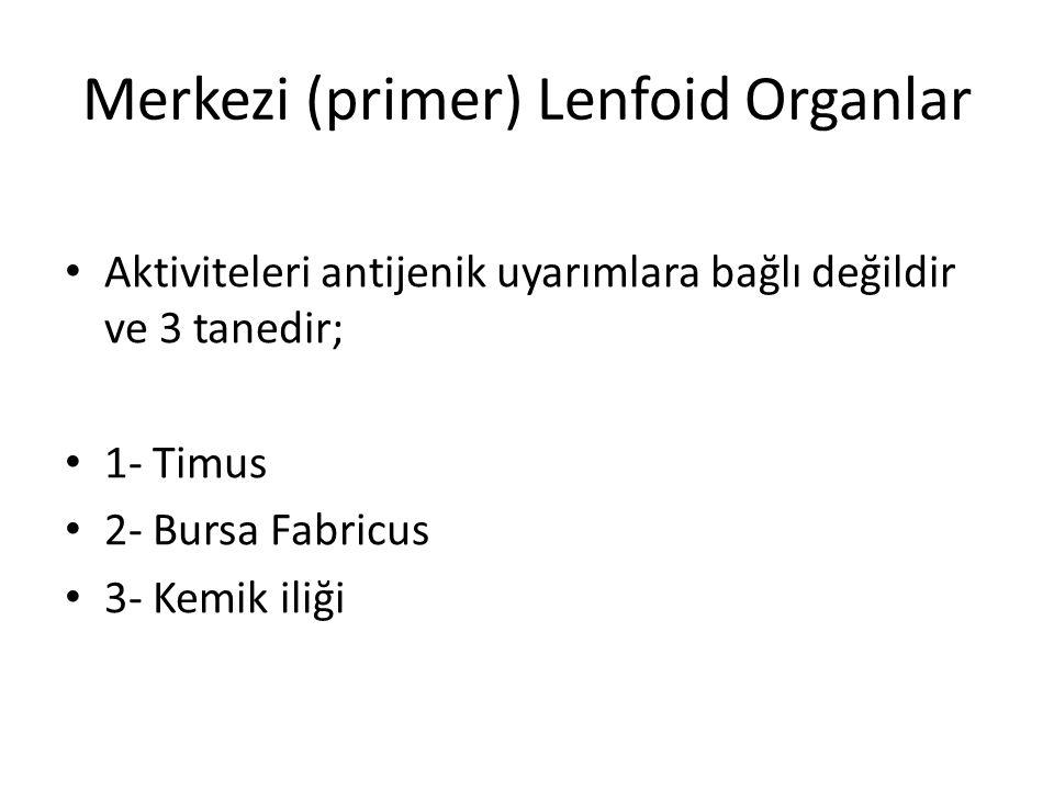 Merkezi (primer) Lenfoid Organlar • Aktiviteleri antijenik uyarımlara bağlı değildir ve 3 tanedir; • 1- Timus • 2- Bursa Fabricus • 3- Kemik iliği