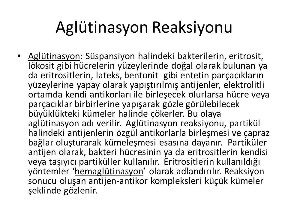 Aglütinasyon Reaksiyonu • Aglütinasyon: Süspansiyon halindeki bakterilerin, eritrosit, lökosit gibi hücrelerin yüzeylerinde doğal olarak bulunan ya da