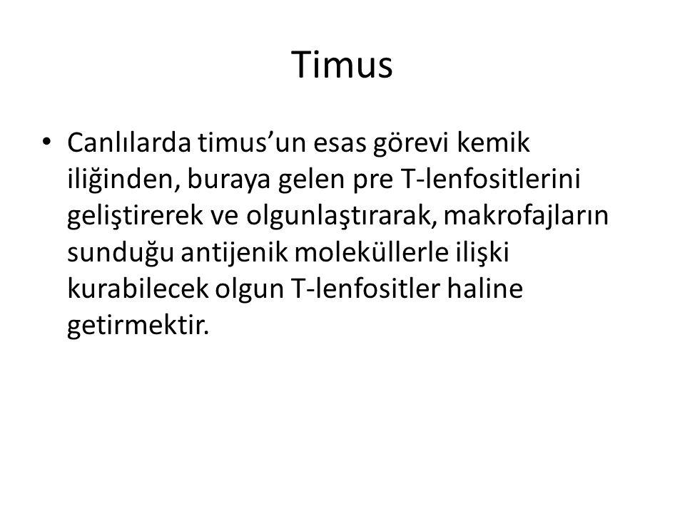 Timus • Canlılarda timus'un esas görevi kemik iliğinden, buraya gelen pre T-lenfositlerini geliştirerek ve olgunlaştırarak, makrofajların sunduğu anti
