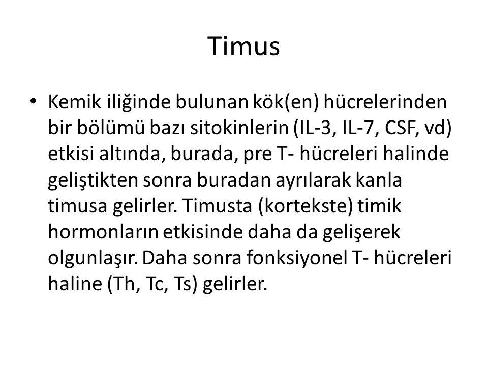 Timus • Kemik iliğinde bulunan kök(en) hücrelerinden bir bölümü bazı sitokinlerin (IL-3, IL-7, CSF, vd) etkisi altında, burada, pre T- hücreleri halin