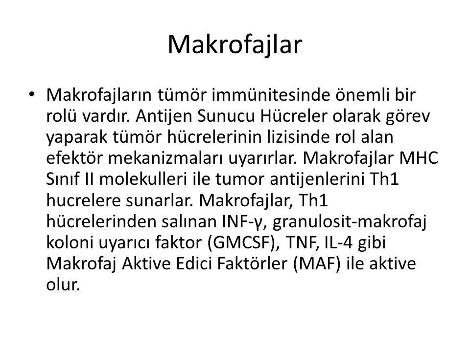 Makrofajlar • Makrofajların tümör immünitesinde önemli bir rolü vardır. Antijen Sunucu Hücreler olarak görev yaparak tümör hücrelerinin lizisinde rol