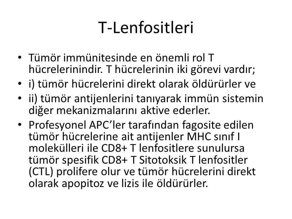 T-Lenfositleri • Tümör immünitesinde en önemli rol T hücrelerinindir. T hücrelerinin iki görevi vardır; • i) tümör hücrelerini direkt olarak öldürürle