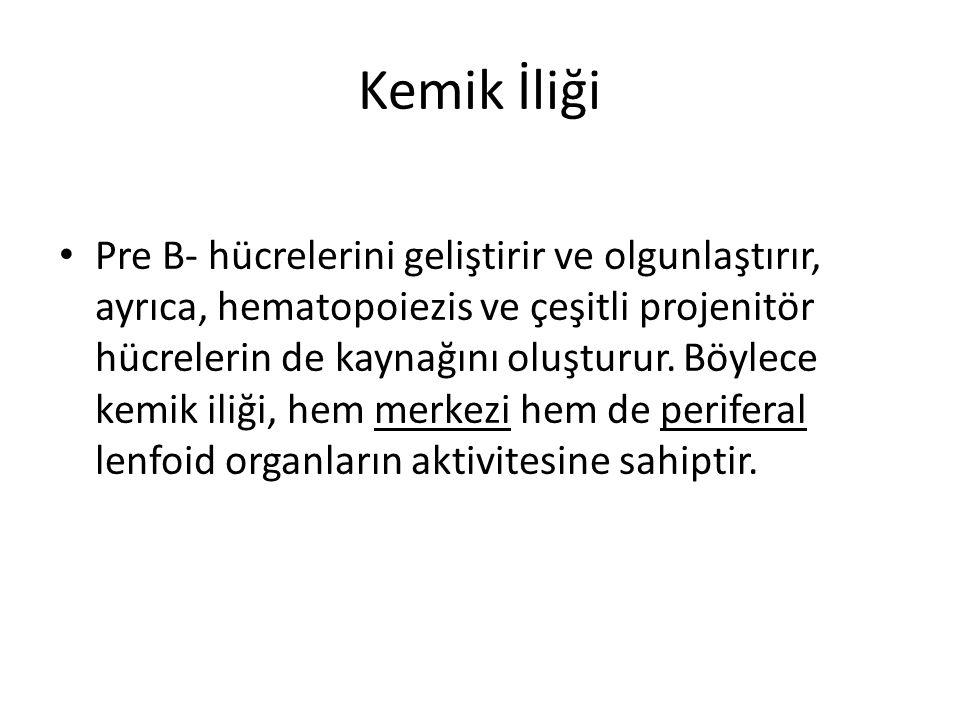 Başlıca Primer İmmün Yetmezlikler • 1- Kök hücre yetmezliği (pre T ve B hücreleri ile miyeloid seri hücreleri) • 2- Primer lenfoid organlarda gelişme, yapısal ve fonksiyonel bozukluklar (Kemik iliği, timus, bursa fabricus, pre T ve B hücreleri) • 3- B-Hücre yetmezliği (IL-2, IL-3, IL-7, BCDF yoksunluğu) • 4- T-Hücre yetmezliği (Embriyogeneziste timusun gelişmemesi, TCDF yoksunluğu)