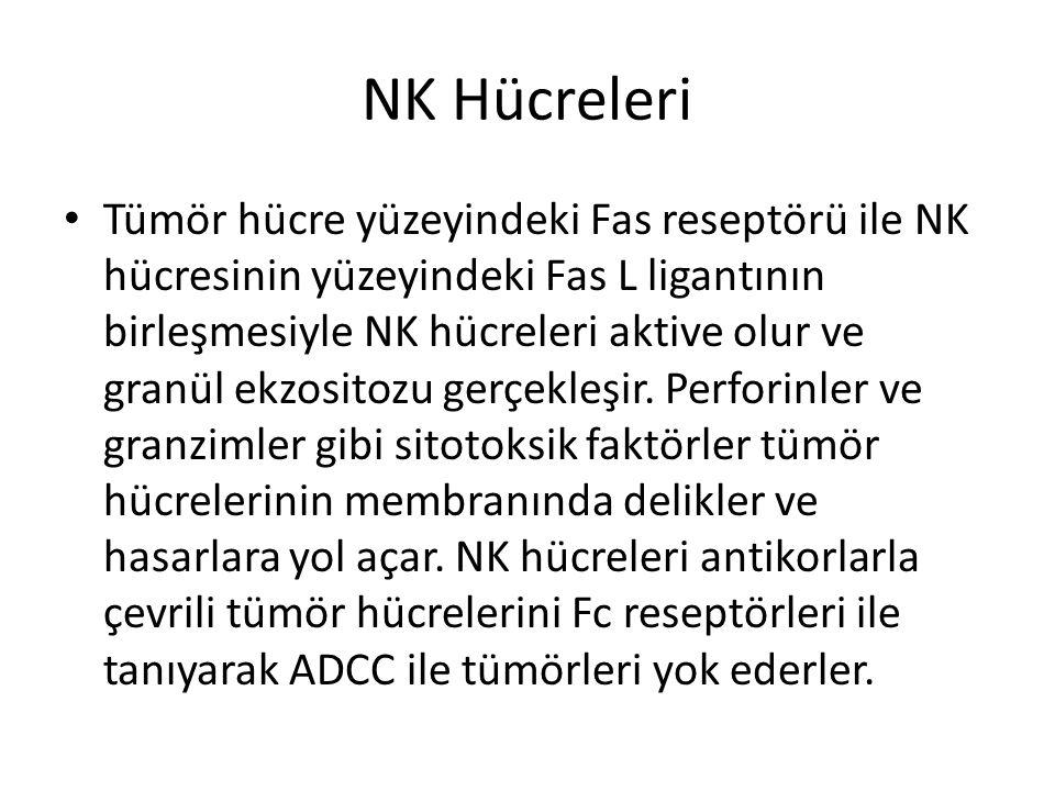 NK Hücreleri • Tümör hücre yüzeyindeki Fas reseptörü ile NK hücresinin yüzeyindeki Fas L ligantının birleşmesiyle NK hücreleri aktive olur ve granül e