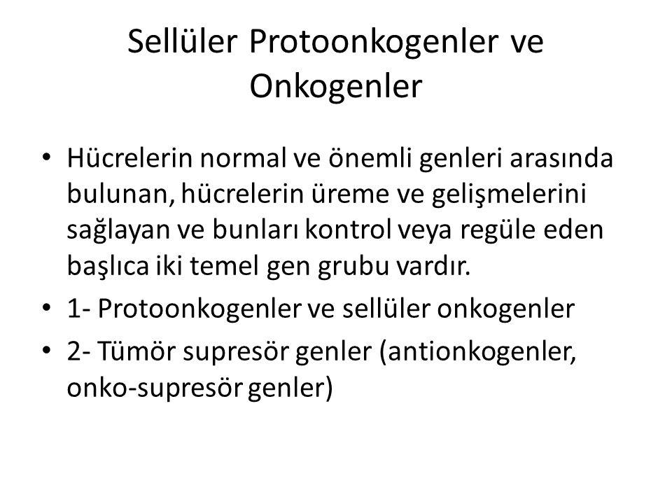 Sellüler Protoonkogenler ve Onkogenler • Hücrelerin normal ve önemli genleri arasında bulunan, hücrelerin üreme ve gelişmelerini sağlayan ve bunları k