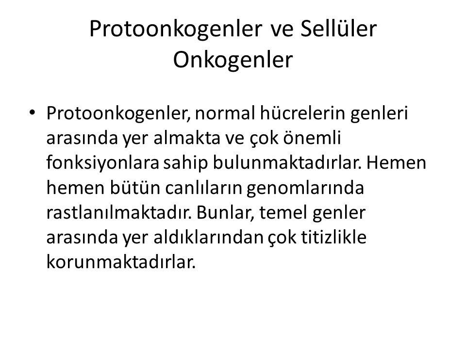 Protoonkogenler ve Sellüler Onkogenler • Protoonkogenler, normal hücrelerin genleri arasında yer almakta ve çok önemli fonksiyonlara sahip bulunmaktad