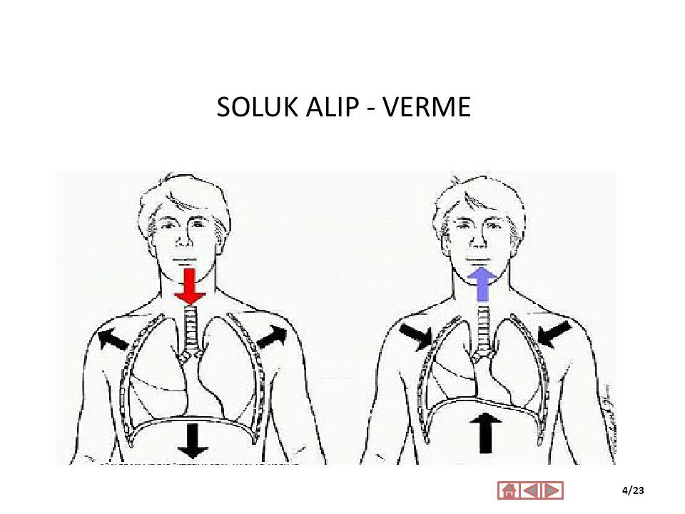 SOLUK ALIP - VERME 4/23