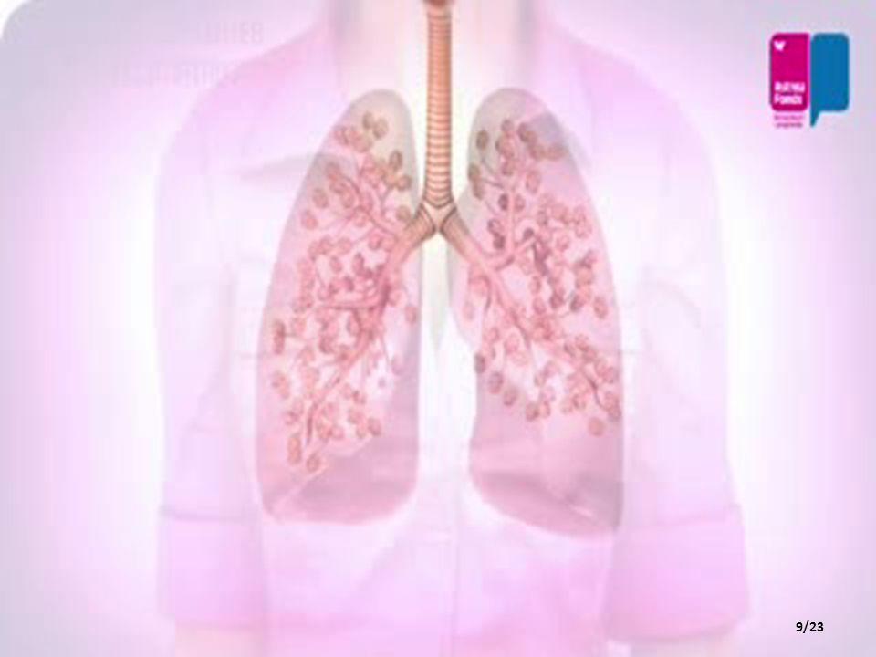 • Bronşlar, soluk borusundan gelen havanın bronşçuklara iletilmesini sağlar.Bronşçuklardan da bronşlara geri iletilir.