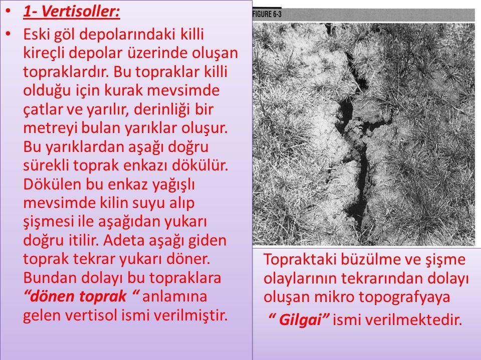 • Topraktaki büzülme ve şişme olaylarının tekrarından dolayı oluşan mikro topografyaya • Gilgai ismi verilmektedir.