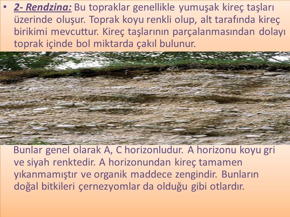 • 2- Rendzina: Bu topraklar genellikle yumuşak kireç taşları üzerinde oluşur.