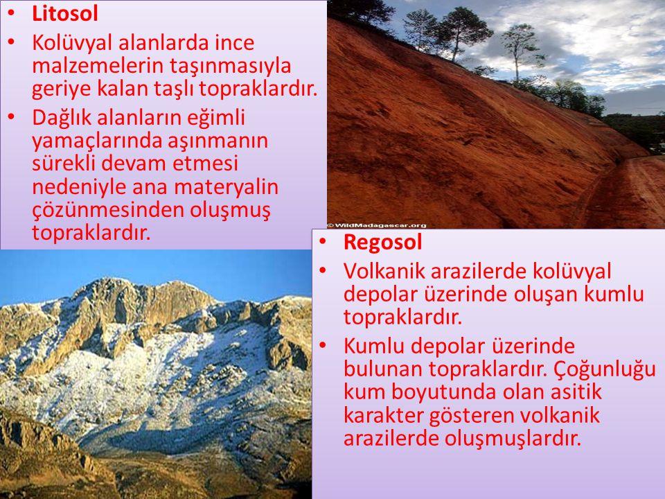 • Litosol • Kolüvyal alanlarda ince malzemelerin taşınmasıyla geriye kalan taşlı topraklardır.