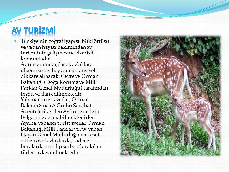  Türkiye'nin coğrafi yapısı, bitki örtüsü ve yaban hayatı bakımından av turizminin gelişmesine elverişli konumdadır. Av turizmine açılacak avlaklar,