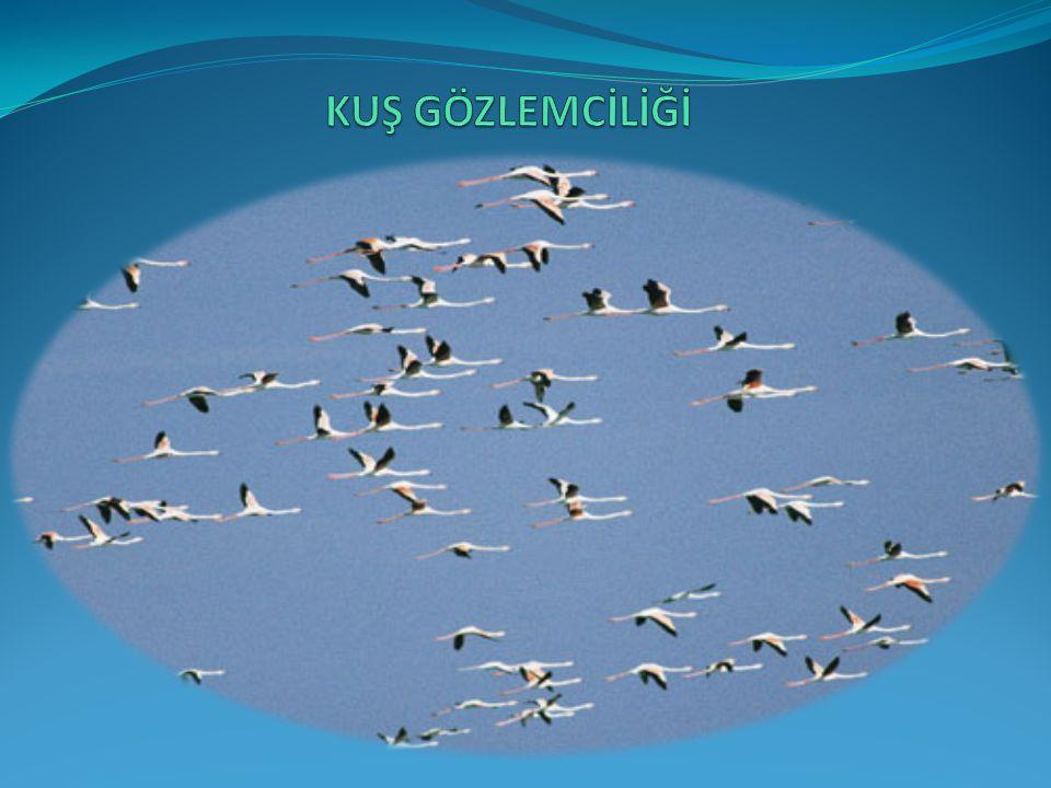 Kuş gözlemciliği doğayı kuşların dünyasından tanımayı sağlayan bir gözlem sporudur.