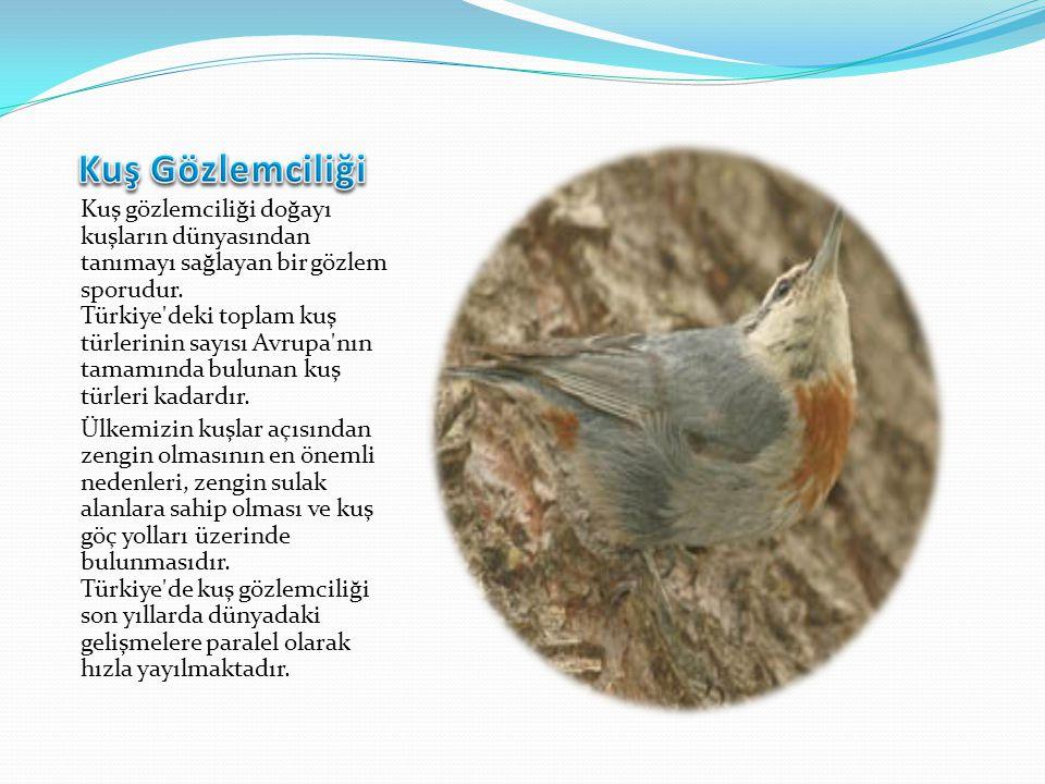 Kuş gözlemciliği doğayı kuşların dünyasından tanımayı sağlayan bir gözlem sporudur. Türkiye'deki toplam kuş türlerinin sayısı Avrupa'nın tamamında bul