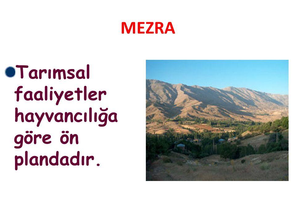 MEZRA Tarımsal faaliyetler hayvancılığa göre ön plandadır.