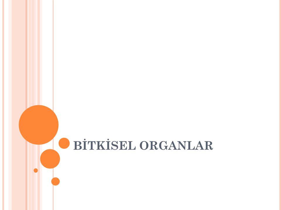Bitkisel organlar dört kısımda incelenir KÖK GÖVDE YAPRAK ÇİÇEK