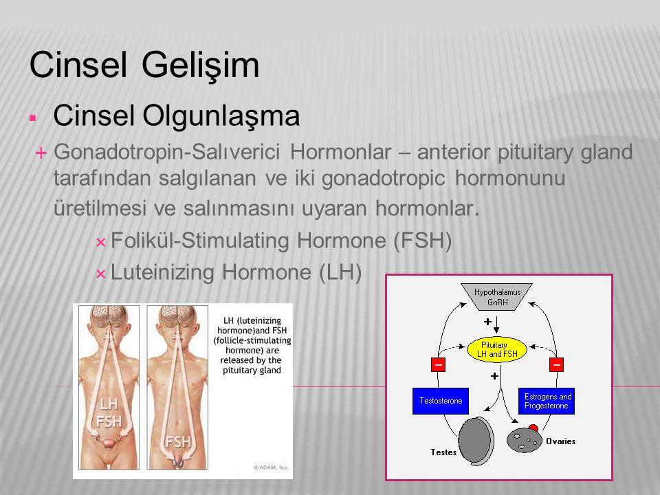 Cinsel Gelişim  Cinsel Olgunlaşma  Gonadotropin-Salıverici Hormonlar – anterior pituitary gland tarafından salgılanan ve iki gonadotropic hormonunu