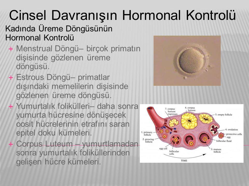 Cinsel Davranışın Hormonal Kontrolü  Kadında Üreme Döngüsünün Hormonal Kontrolü  Menstrual Döngü– birçok primatın dişisinde gözlenen üreme döngüsü.