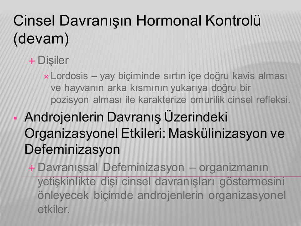 Cinsel Davranışın Hormonal Kontrolü (devam)  Dişiler  Lordosis – yay biçiminde sırtın içe doğru kavis alması ve hayvanın arka kısmının yukarıya doğr