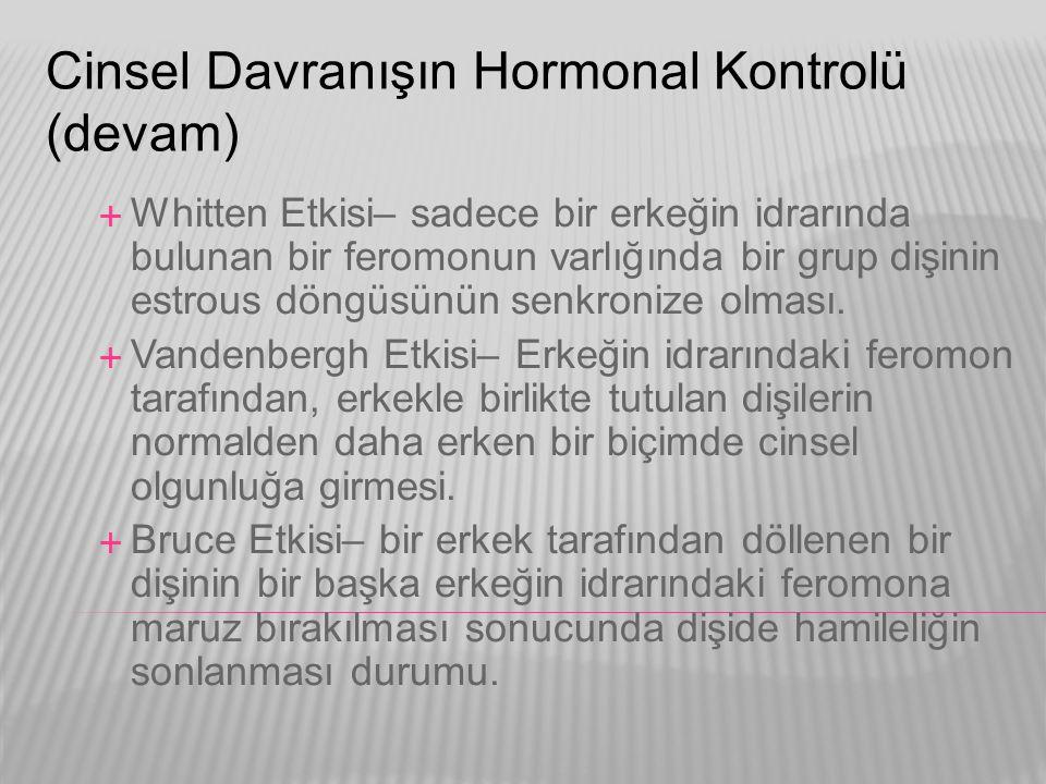 Cinsel Davranışın Hormonal Kontrolü (devam)  Whitten Etkisi– sadece bir erkeğin idrarında bulunan bir feromonun varlığında bir grup dişinin estrous d