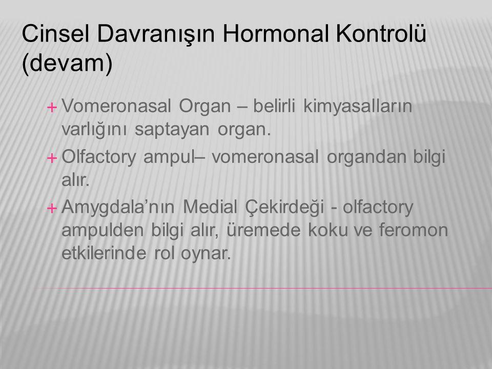 Cinsel Davranışın Hormonal Kontrolü (devam)  Vomeronasal Organ – belirli kimyasalların varlığını saptayan organ.  Olfactory ampul– vomeronasal organ