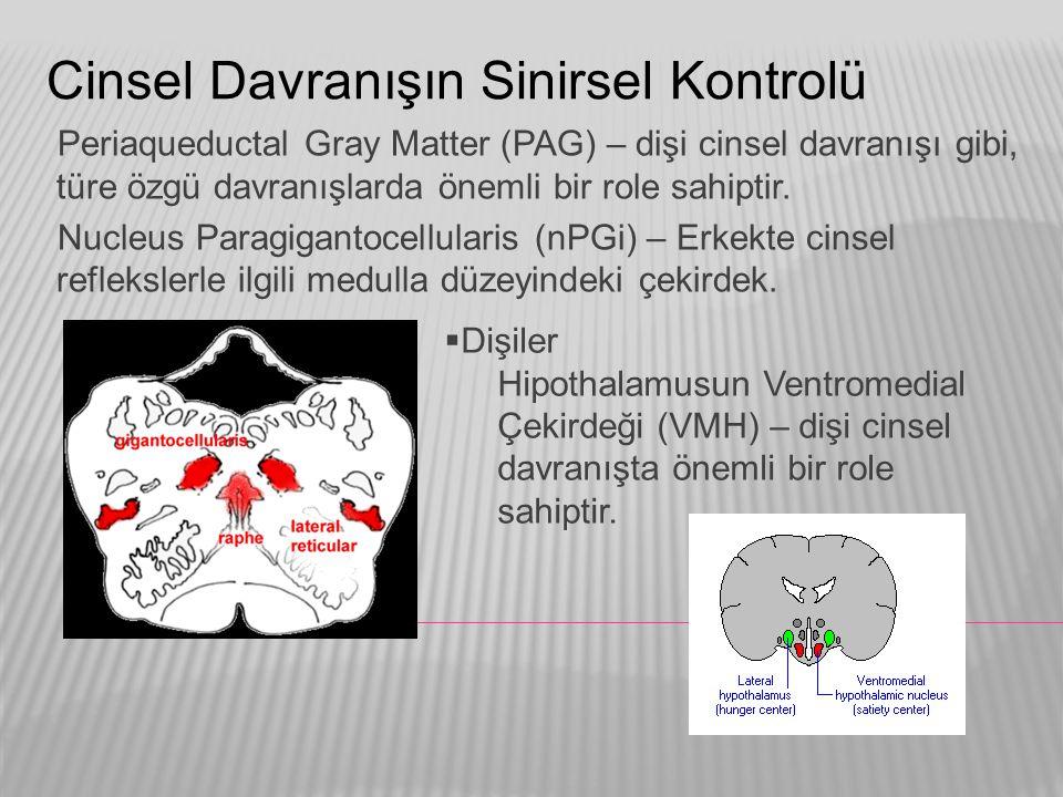 Cinsel Davranışın Sinirsel Kontrolü Periaqueductal Gray Matter (PAG) – dişi cinsel davranışı gibi, türe özgü davranışlarda önemli bir role sahiptir. N