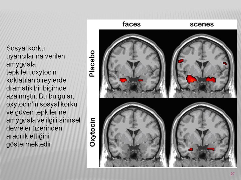 27 Sosyal korku uyarıcılarına verilen amygdala tepkileri,oxytocin koklatılan bireylerde dramatik bir biçimde azalmıştır. Bu bulgular, oxytocin'in sosy