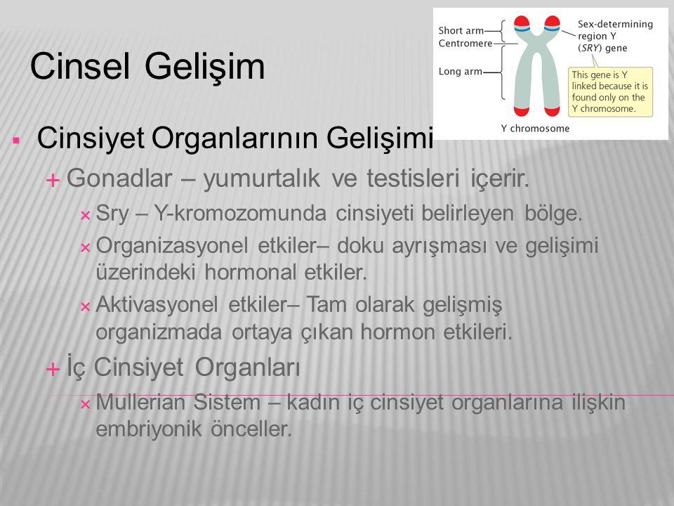 Cinsel Gelişim  Cinsiyet Organlarının Gelişimi  Gonadlar – yumurtalık ve testisleri içerir.  Sry – Y-kromozomunda cinsiyeti belirleyen bölge.  Org