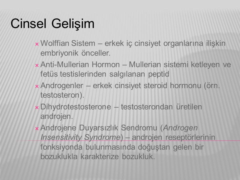 Cinsel Gelişim  Wolffian Sistem – erkek iç cinsiyet organlarına ilişkin embriyonik önceller.  Anti-Mullerian Hormon – Mullerian sistemi ketleyen ve