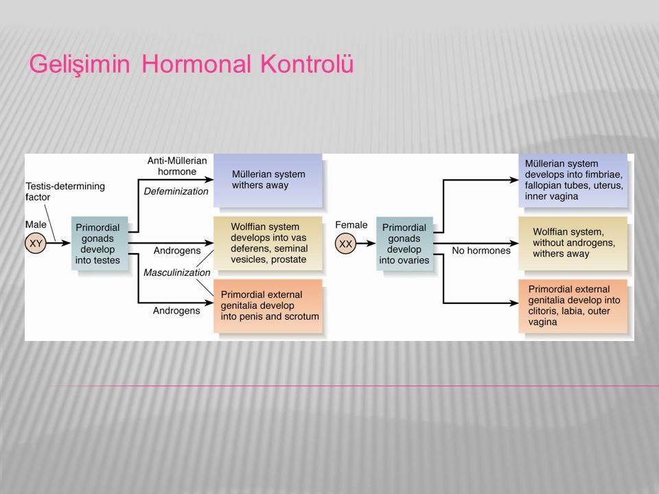 Gelişimin Hormonal Kontrolü