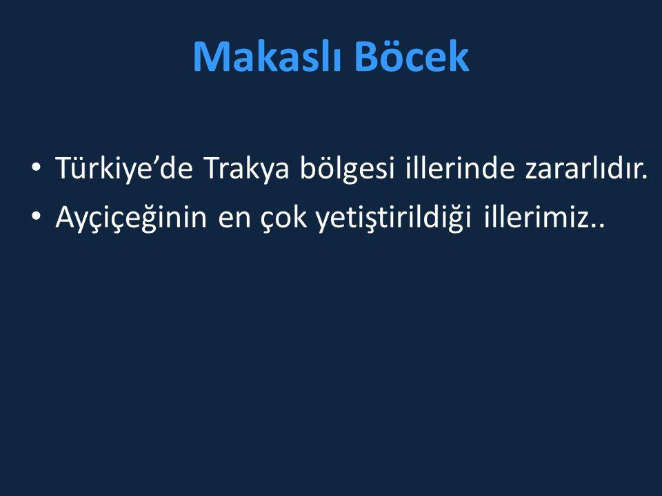 Makaslı Böcek • Türkiye'de Trakya bölgesi illerinde zararlıdır. • Ayçiçeğinin en çok yetiştirildiği illerimiz..