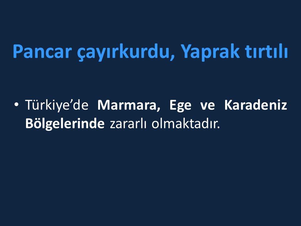 Pancar çayırkurdu, Yaprak tırtılı • Türkiye'de Marmara, Ege ve Karadeniz Bölgelerinde zararlı olmaktadır.