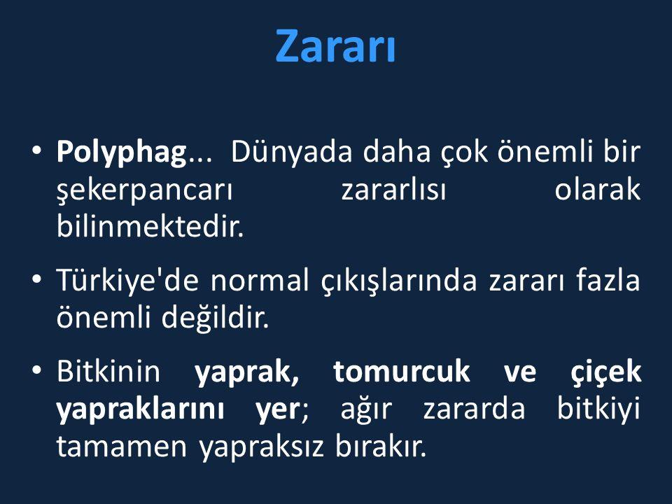 Zararı • Polyphag... Dünyada daha çok önemli bir şekerpancarı zararlısı olarak bilinmektedir. • Türkiye'de normal çıkışlarında zararı fazla önemli değ
