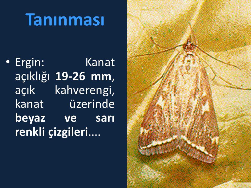 Tanınması • Ergin: Kanat açıklığı 19-26 mm, açık kahverengi, kanat üzerinde beyaz ve sarı renkli çizgileri....