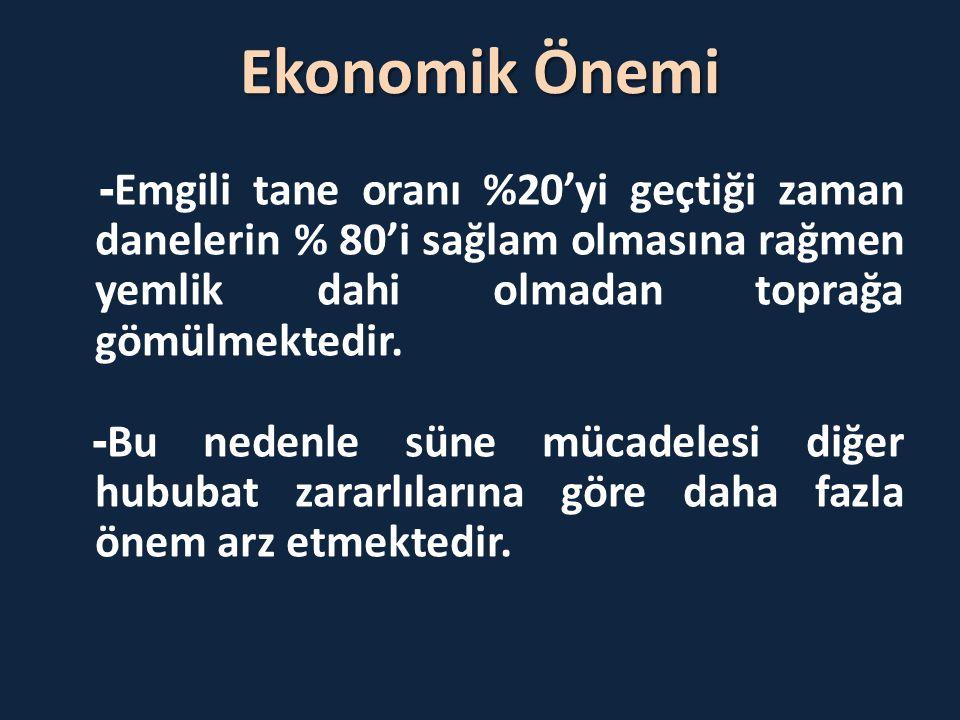Ekonomik Önemi - Emgili tane oranı %20'yi geçtiği zaman danelerin % 80'i sağlam olmasına rağmen yemlik dahi olmadan toprağa gömülmektedir. - Bu nedenl