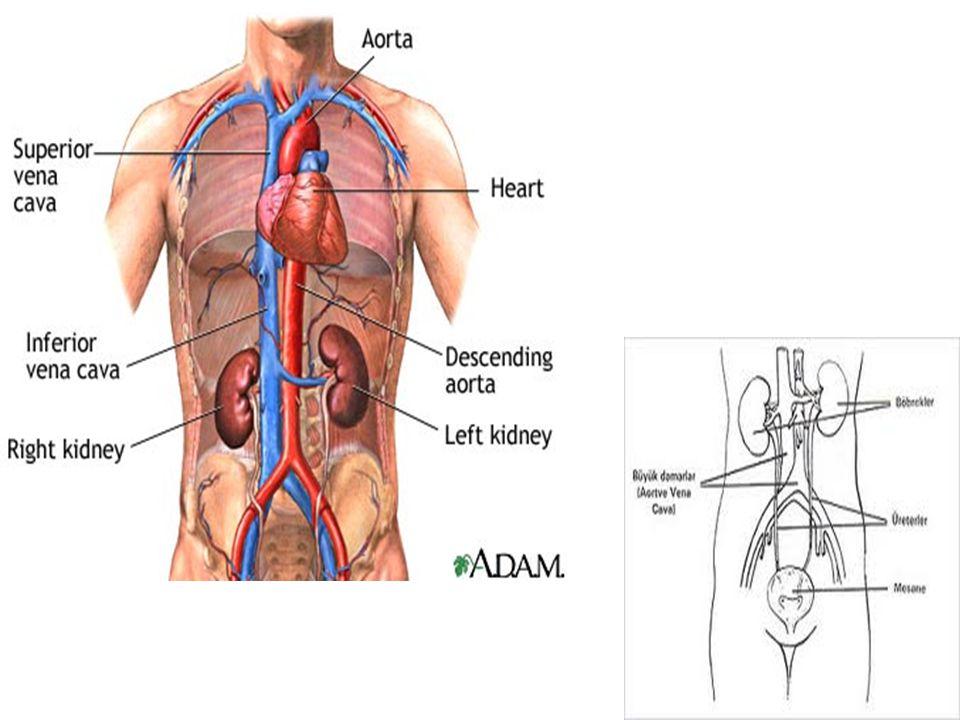1.ADA.Diabetes Care 2007;30(suppl 1):S4 – S41. 2.ADA.
