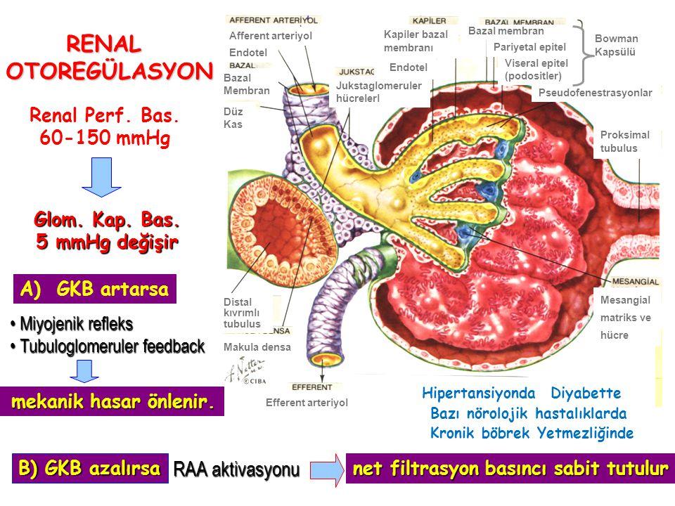 Afferent arteriyol Mesangial matriks ve hücre Endotel Bazal membran Bowman Kapsülü Endotel Distal kıvrımlı tubulus Makula densa Efferent arteriyol Proksimal tubulus Jukstaglomeruler hücrelerl Kapiler bazal membranı Düz Kas Pseudofenestrasyonlar Bazal Membran Viseral epitel (podositler) Pariyetal epitel RENAL OTOREGÜLASYON Renal Perf.