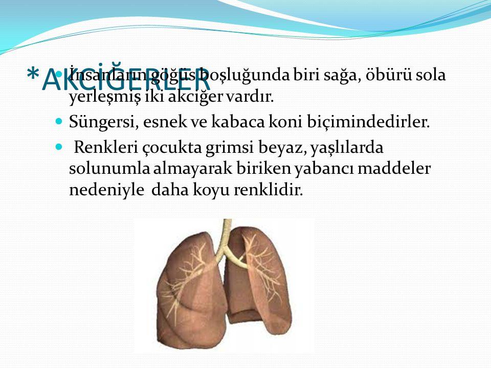 *AKCİĞERLER  İnsanların göğüs boşluğunda biri sağa, öbürü sola yerleşmiş iki akciğer vardır.  Süngersi, esnek ve kabaca koni biçimindedirler.  Ren