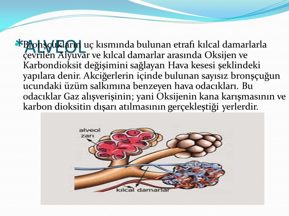 *ALVEOL  Bronşçukların uç kısmında bulunan etrafı kılcal damarlarla çevrilen Alyuvar ve kılcal damarlar arasında Oksijen ve Karbondioksit değişimini