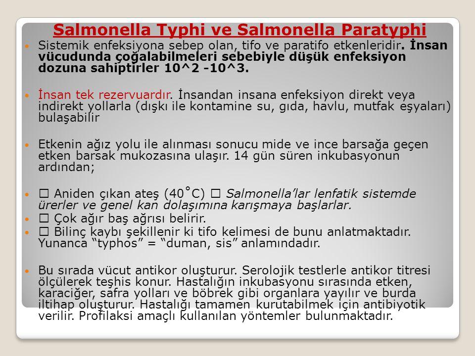 Salmonella Typhi ve Salmonella Paratyphi  Sistemik enfeksiyona sebep olan, tifo ve paratifo etkenleridir.
