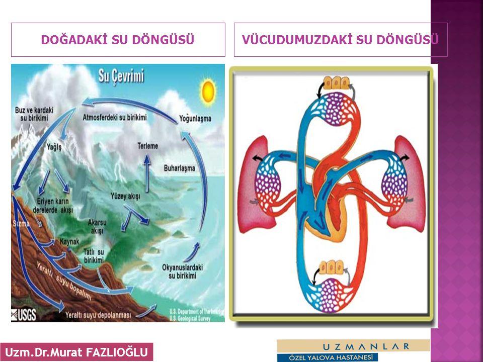 DOĞADAKİ SU DÖNGÜSÜVÜCUDUMUZDAKİ SU DÖNGÜSÜ 4 Uzm.Dr.Murat FAZLIOĞLU