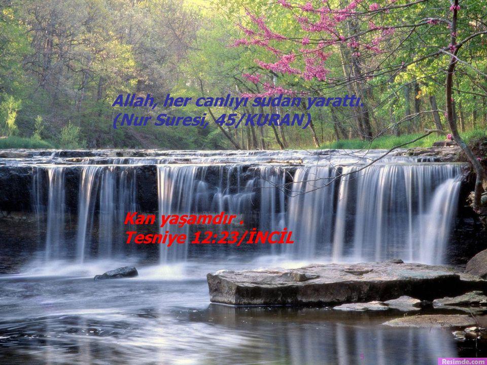Allah, her canlıyı sudan yarattı. (Nur Suresi, 45/KURAN) Kan yaşamdır. Tesniye 12:23/İNCİL 5