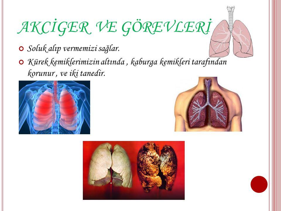 KALP VE GÖREVLERİ: Vücudumuzun solunda yer alır. Kanın vücutta dolaşmasını sağlar. Kalbimizin büyüklüğü yumruğumuz kadardır.