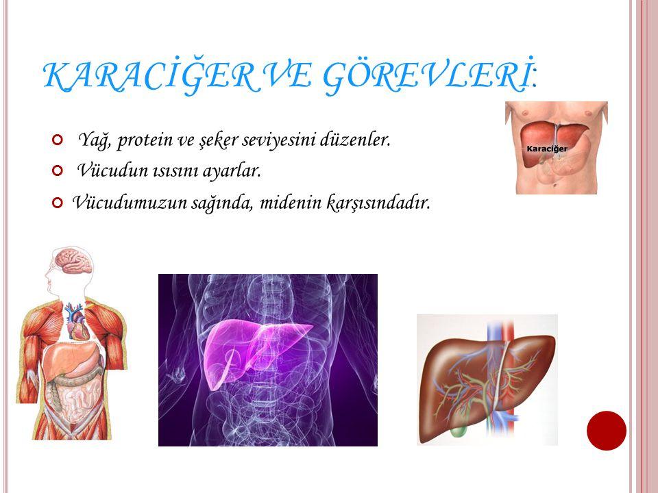 BÖBREK VE GÖREVLERİ Böbrekler boşaltım organımızdır. Böbrekler vücudumuzda iki tanedir. Her iki elimizi belimize koyduğumuzda başparmağımızı bastıralı