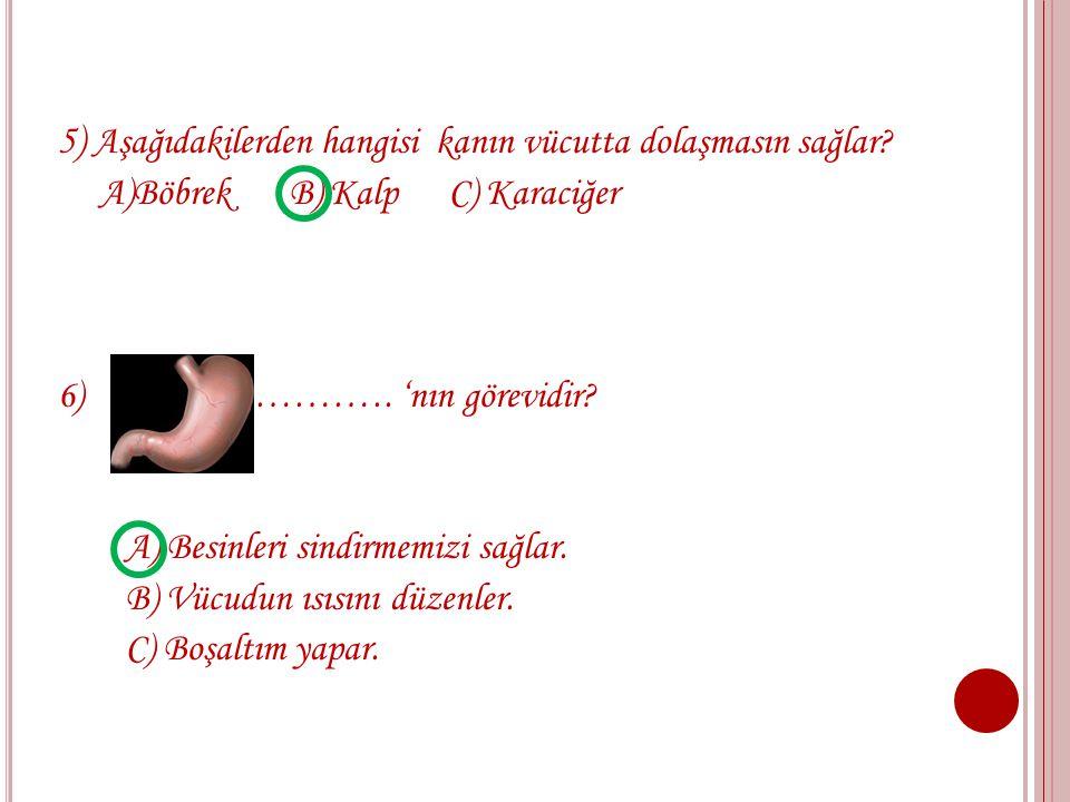 3) Aşağıdakilerden hangisi iç organdır? A) Böbrek B) Göz C) Burun 4) Aşağıdakilerden hangisi soluk alıp vermeyi sağlar? A) B) C)