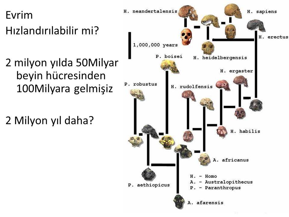 22 Evrim Hızlandırılabilir mi? 2 milyon yılda 50Milyar beyin hücresinden 100Milyara gelmişiz 2 Milyon yıl daha?
